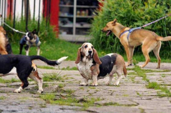 Secretaría de Salud anunció recursos para centro de bienestar animal