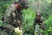 Ejercito erradica más de 100 hectáreas de cultivos ilícitos en Cauca
