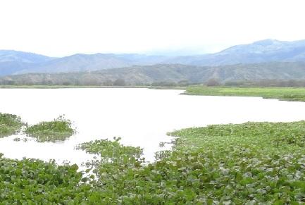 CVC inició obras de recuperación de la Laguna de Sonso, en Buga