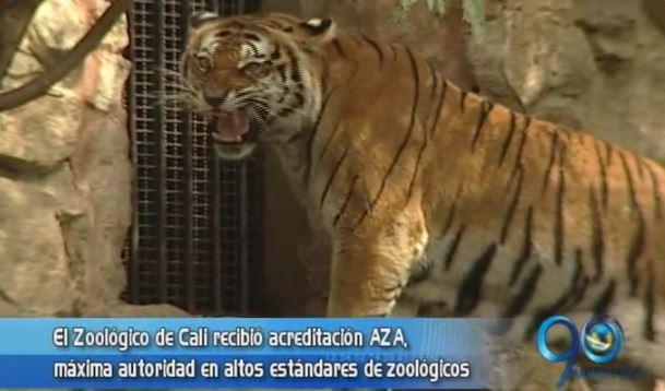 Zoológico de Cali recibió acreditación AZA por buen cuidado animal