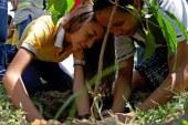 Personería identificó 17 de 22 comunas con déficit arbóreo