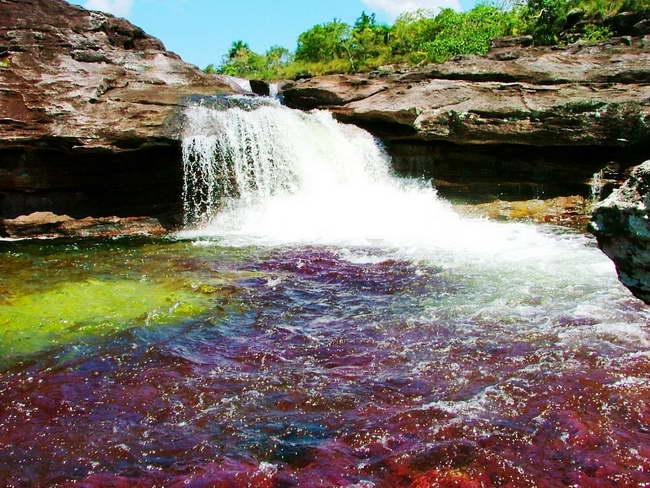 ANLA revoca licencia para la extracción petrolera en Caño Cristales