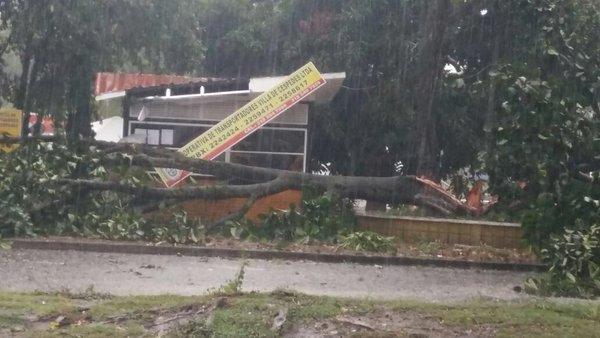 Inundaciones y árboles caídos por lluvias en centro y norte del Valle