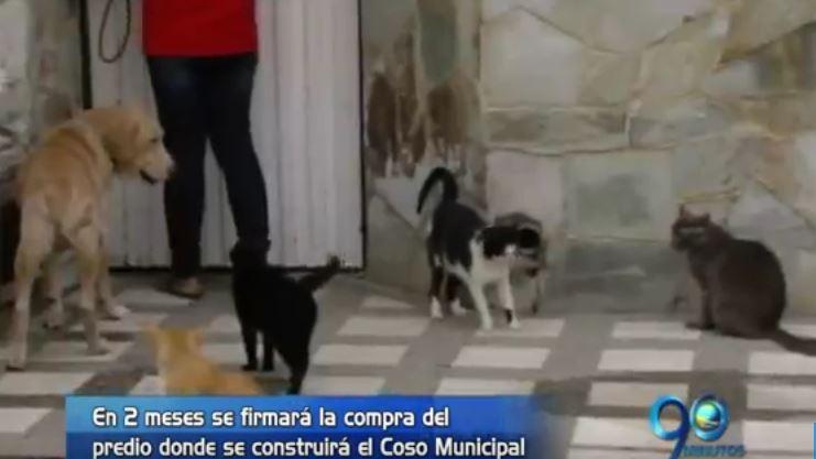 Alcaldía explicó los beneficios que traerá el nuevo Coso Municipal