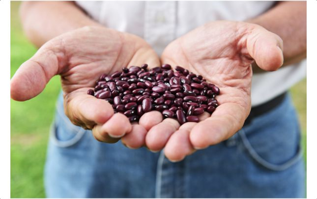 Lanzan nuevas variedades de fríjol que combaten la desnutrición