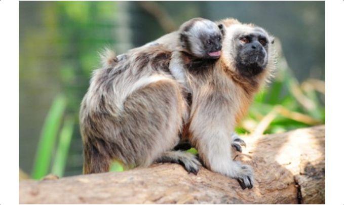180 representantes de zoológicos latinoamericanos llegaron a Cali