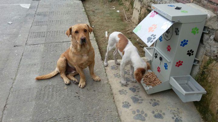 Animalistas denuncian que se están robando los Comedog's