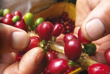 20.000 mujeres hacen parte de proyecto para potencializar el sector cafetero