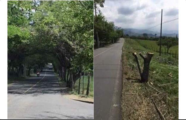Personería estudiará tala de árboles en Megaobra de la vía Pance