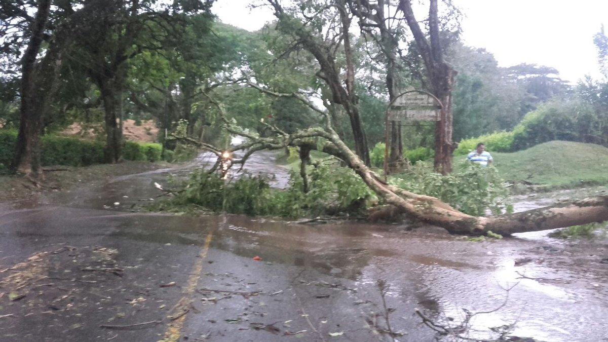 Vendaval en Caicedonia deja nueve viviendas afectadas y árboles caídos