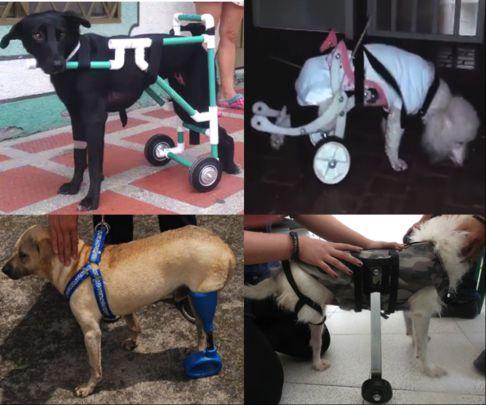 Estudiantes de la Autónoma ayudan a animales discapacitados