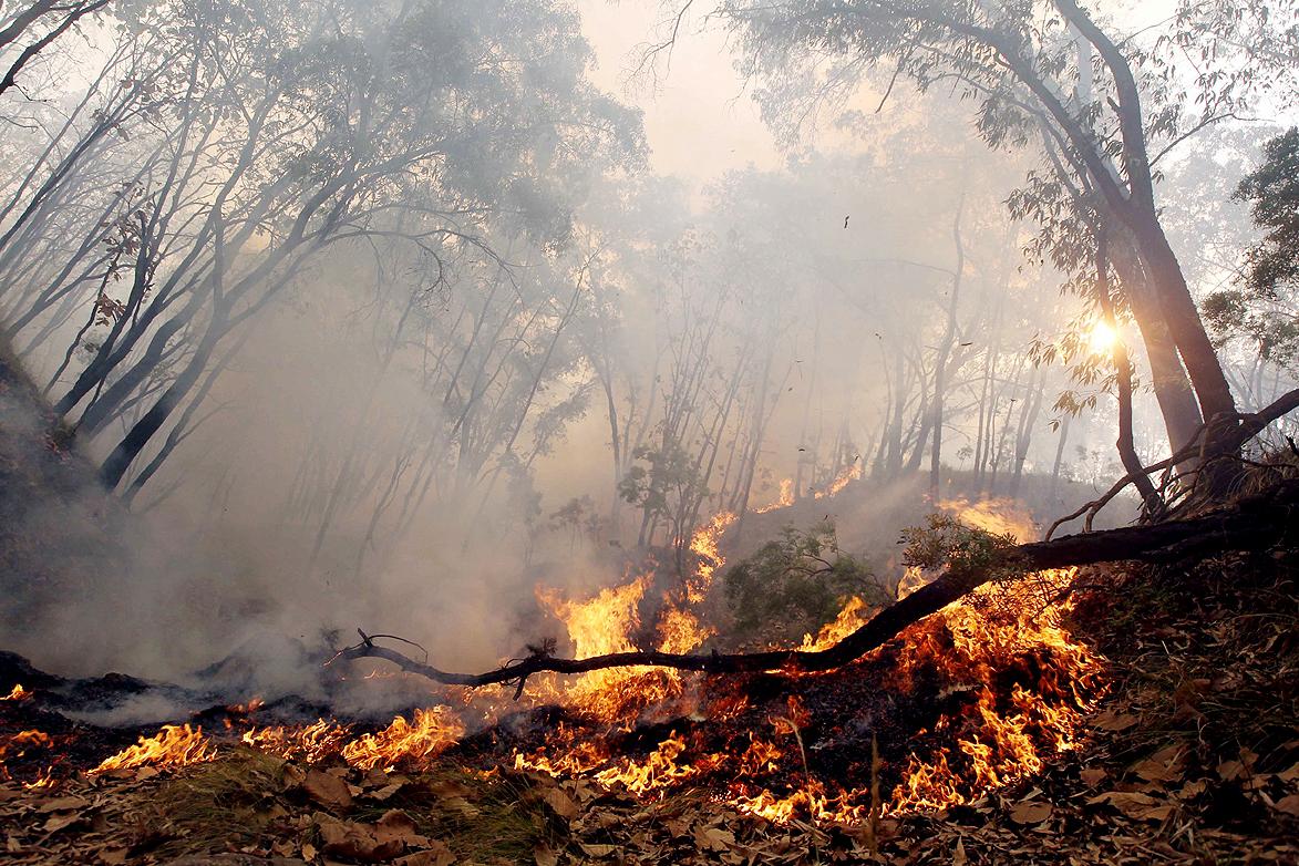 Alertan incendios forestales en Valle por altas temperaturas