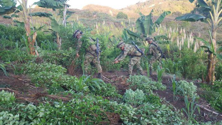 Fuerzas militares erradicaron semilleros de cultivos ilícitos en el Cauca