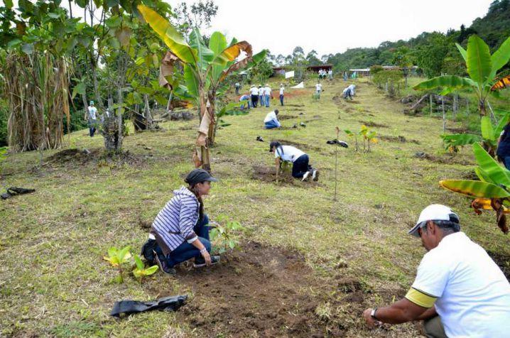 Proyecto plantará un millón de árboles en el Valle del Cauca