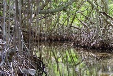 Hallan cuerpo del presunto asesino de tres niñas en Tumaco