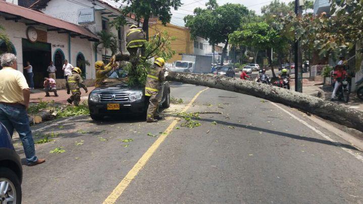 Árbol cayó sobre parabrisas de vehículo en el oeste de Cali