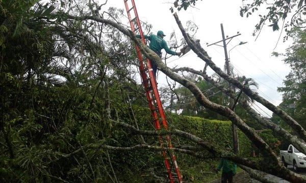 Dagma alerta a los caleños sobre emergencias por árboles en mal estado
