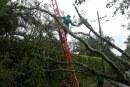 Dagma recibe 200 solicitudes mensuales, exigiendo tala de árboles