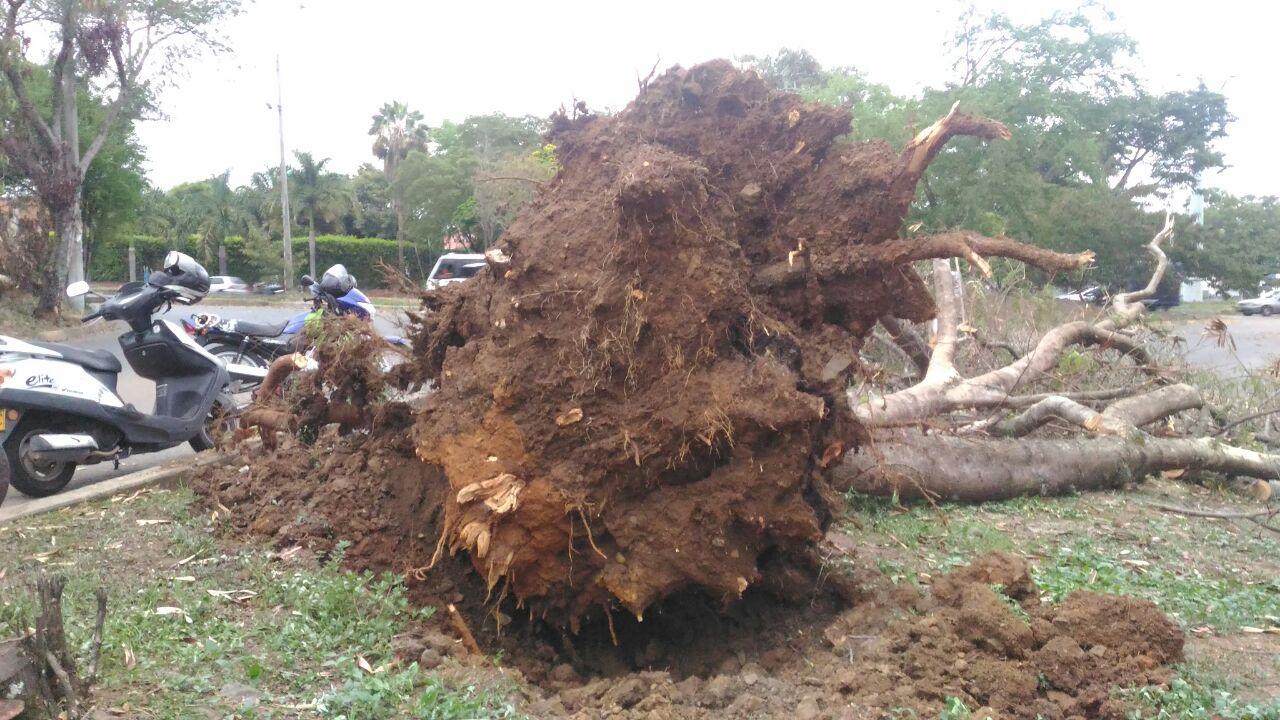 Destrozos en centro comercial, árboles caídos y techo afectado tras lluvias