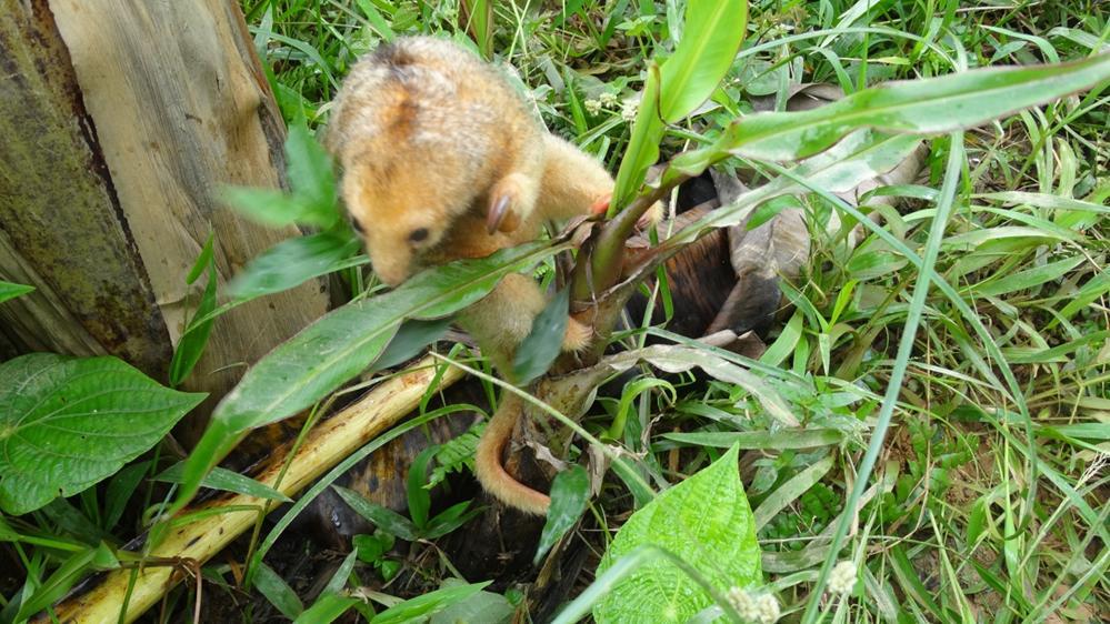 CVC rescata a 42 animales de tráfico de fauna en Buenaventura