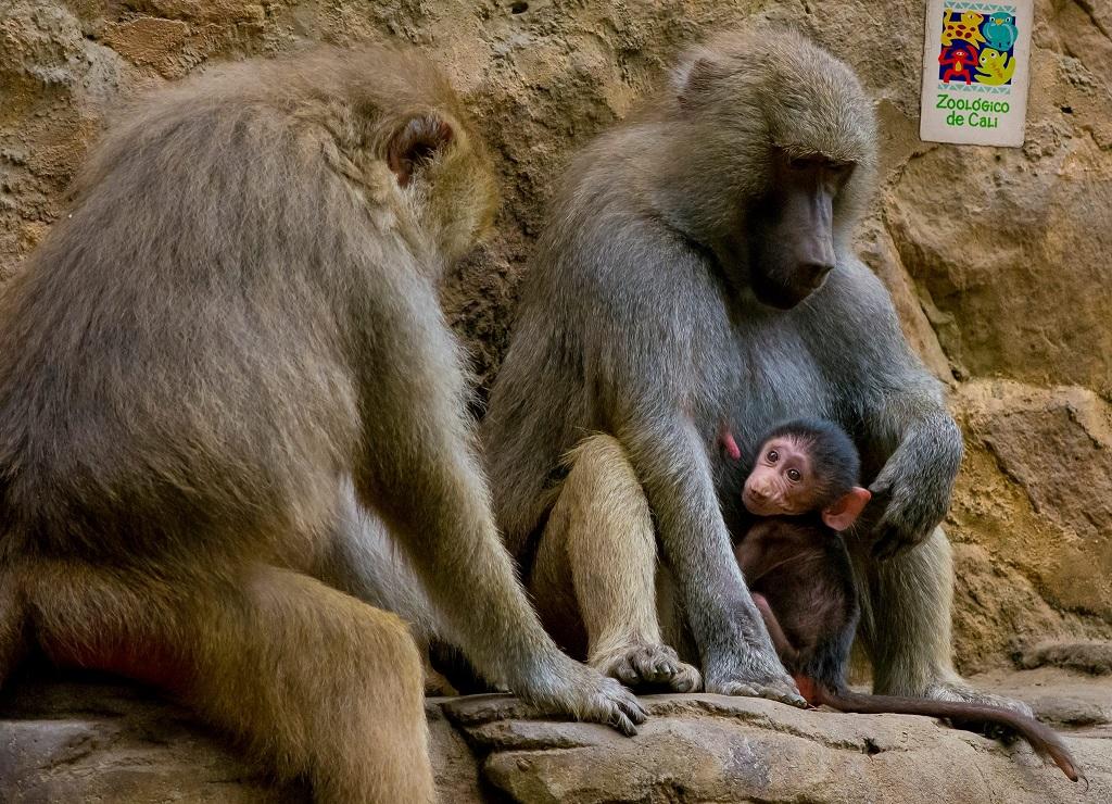 El zoológico de Cali, la aventura del saber
