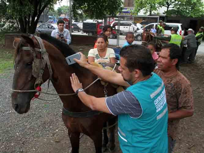 Más de 400 caballos carretilleros dejarán las calles de Cali