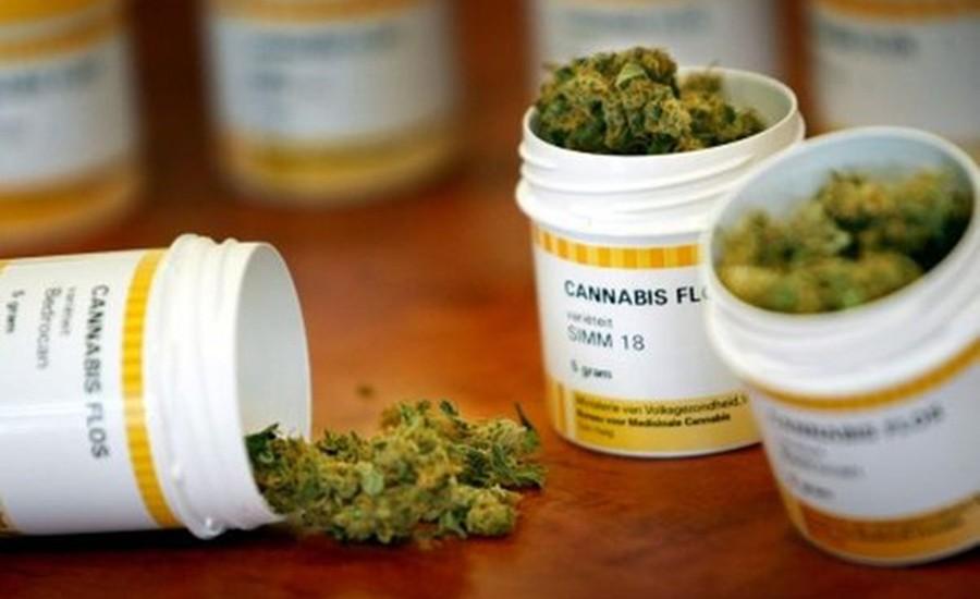 El Cauca será pionero en producción de marihuana medicinal