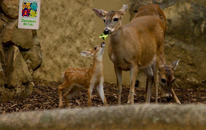 En fotos: Conozca los nuevos integrantes del Zoológico de Cali