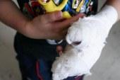 Un menor de 14 años es la primera víctima de la pólvora en Cauca