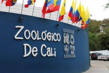 Emergencia por COVID-19 tiene en zozobra a los animales del Zoológico de Cali, piden ayuda a los caleños