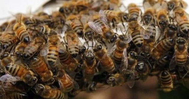 Víctima mortal por ataque de abejas en la vereda el Chontaduro