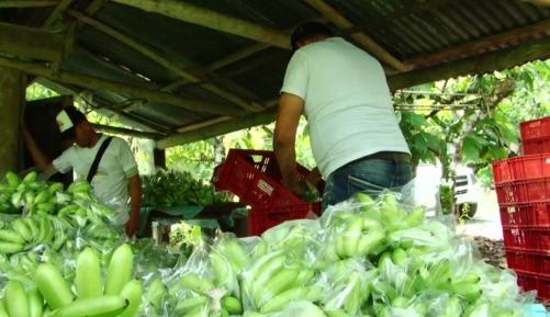 Cultivadores ganan premio de desarrollo sostenible