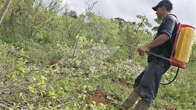 Colombia empezará uso manual de glifosato en cultivos de coca