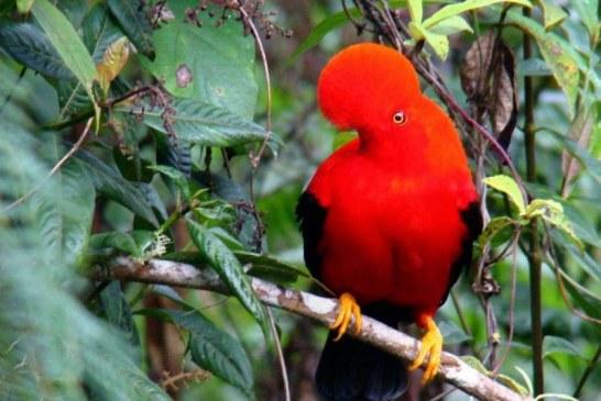 En el Valle se avistaron 718 especies de aves durante el Global Bid Day 2019