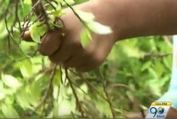 Revelan desarticulación de 'Los Pelusos' y control territorial contra cultivos ilícitos en Jamundí