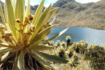 Páramo de Las Domínguez emerge como destino turístico del Valle del Cauca
