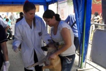 Campaña de vacunación a mascotas estará en 34 municipios del Valle
