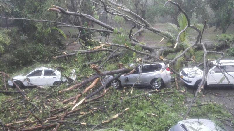 Caída de árboles y daños en carros dejaron fuertes lluvias de este martes