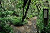 CVC suma 100 hectáreas al Jardín Botánico en el oeste de Cali
