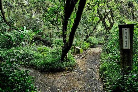 Con gala benéfica buscan recaudar fondos para recuperar el Jardín Botánico de Cali