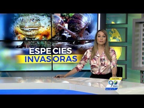 EMISIÓN VIERNES 13 DE ENERO DE 2017