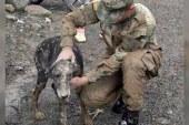 Animales, las otras víctimas por la avalancha en Mocoa, Putumayo