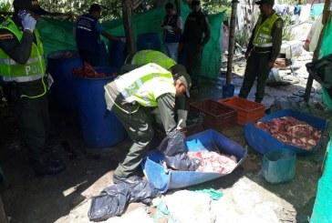 Policía descubre matadero clandestino que comercializaba carne de caballo