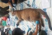 Dagma rescató animales en estado de desnutrición por inundación en Cali