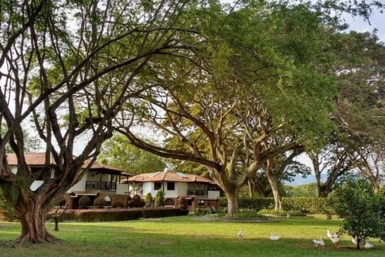 Alcaldía de Cali anunció que operadores de aseo se encargarán de podar árboles