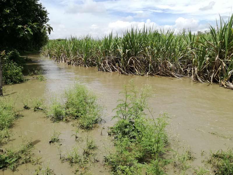 Ola invernal obligó a suspender 90% de cosecha de caña en el Valle