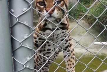Informe de En Detalle 'Negocio Salvaje: Mercado ilegal de fauna silvestre'