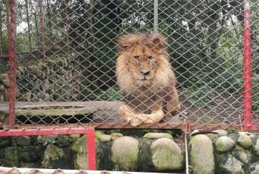 Animales del refugio Villa Lorena en Floralia, a punto de ser desalojados