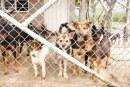 Albergue para perros de Ginebra podría cerrar: entérese cómo ayudar