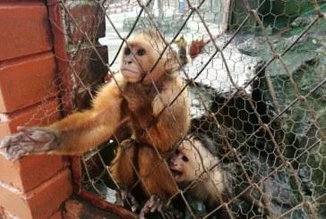 Animales de refugio 'Villa Lorena' serán trasladados, no sacrificados: Dagma
